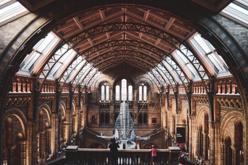 get-married-at-natural-history-museum