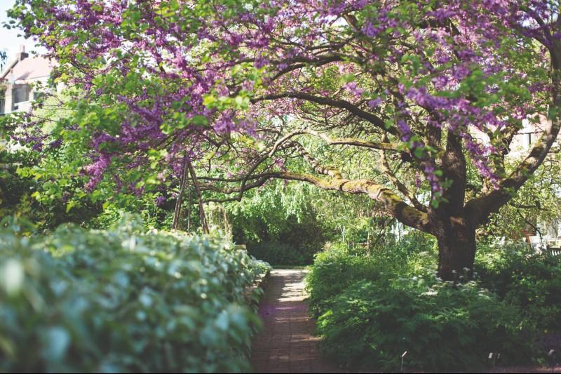 Secret-chelsea-physic-garden-eco