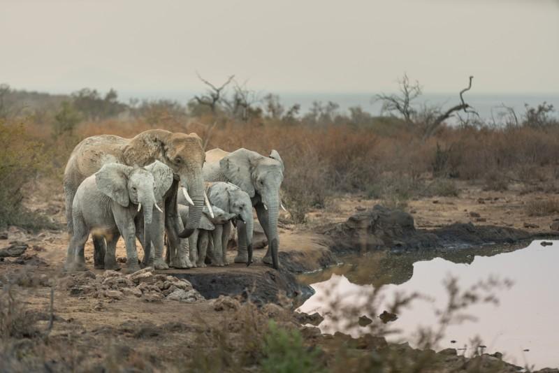 elephants-royal-madikwe