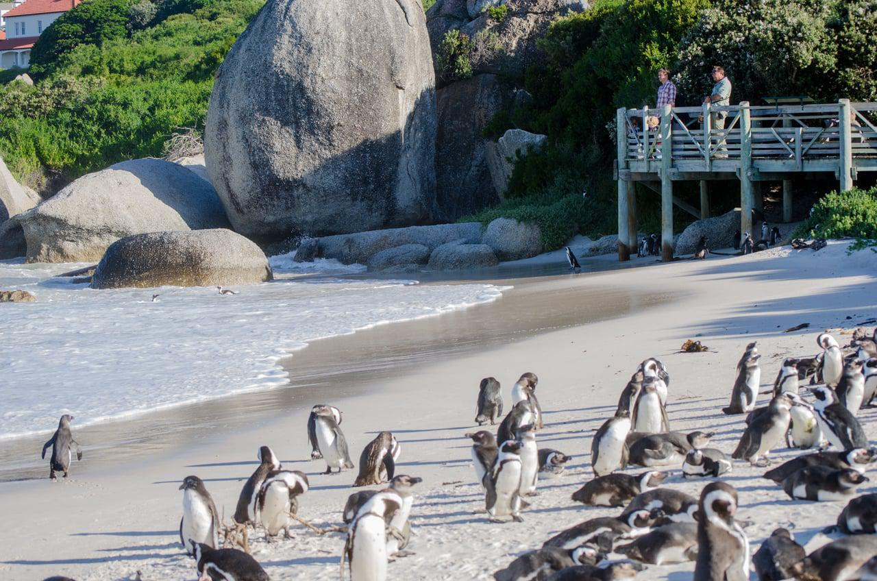 boulders-beach-capte-town